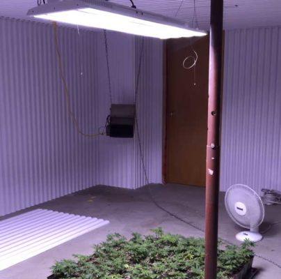eclairage-cannabis